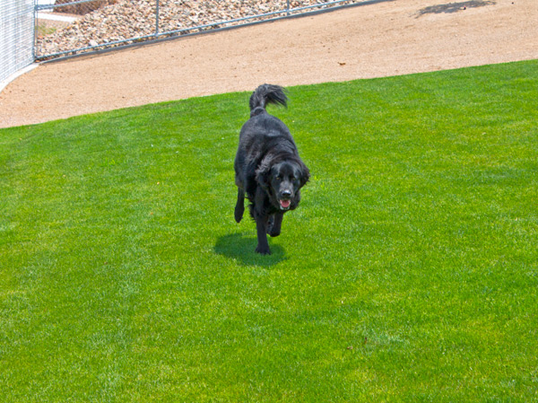 Dog Training Tip Healthy Pets