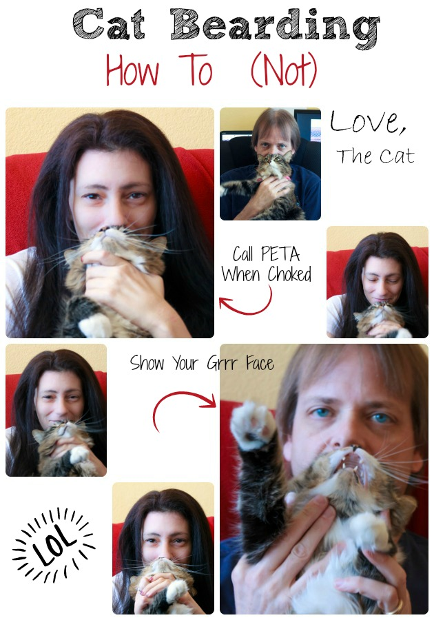 Cat Bearding How To (Not) – The Cat Tells All