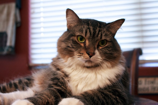 Cat Health Tips | Sassy Girlz Blog