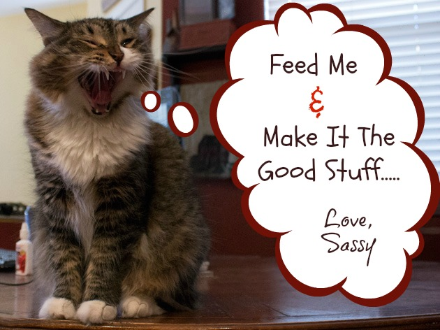 Cat Health | Sassy Girlz Blog #shop