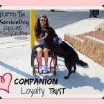 Harris The Service Dog Training Tips – Positive Reinforcement Technique