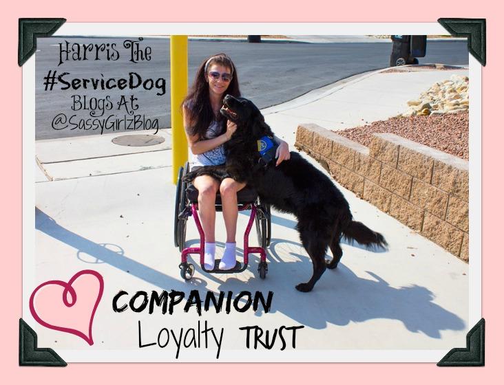 Harris The Service Dog Training Tips – Positive Reinforcement Technique