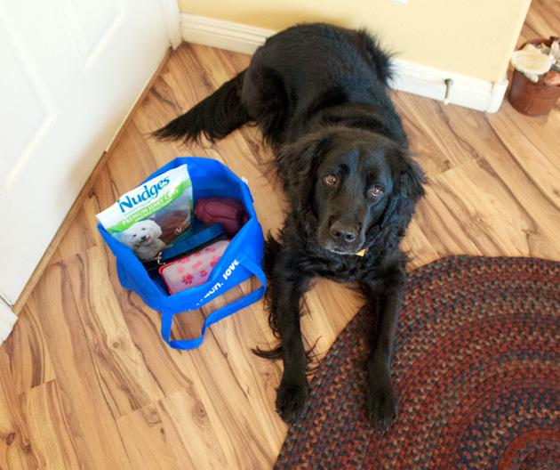Dog Training Tips | Sassy Girlz Blog