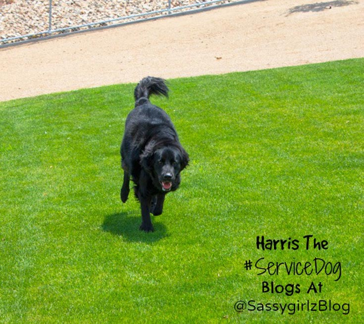 Basic Dog Training Tips And Techniques From Harris The Las Vegas Service Dog